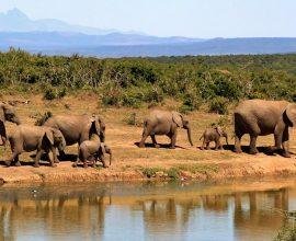 wildlife cruise in afrika