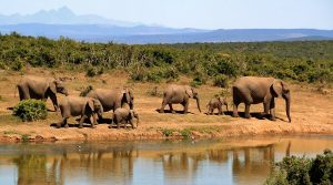 wildlife cruise in afrika