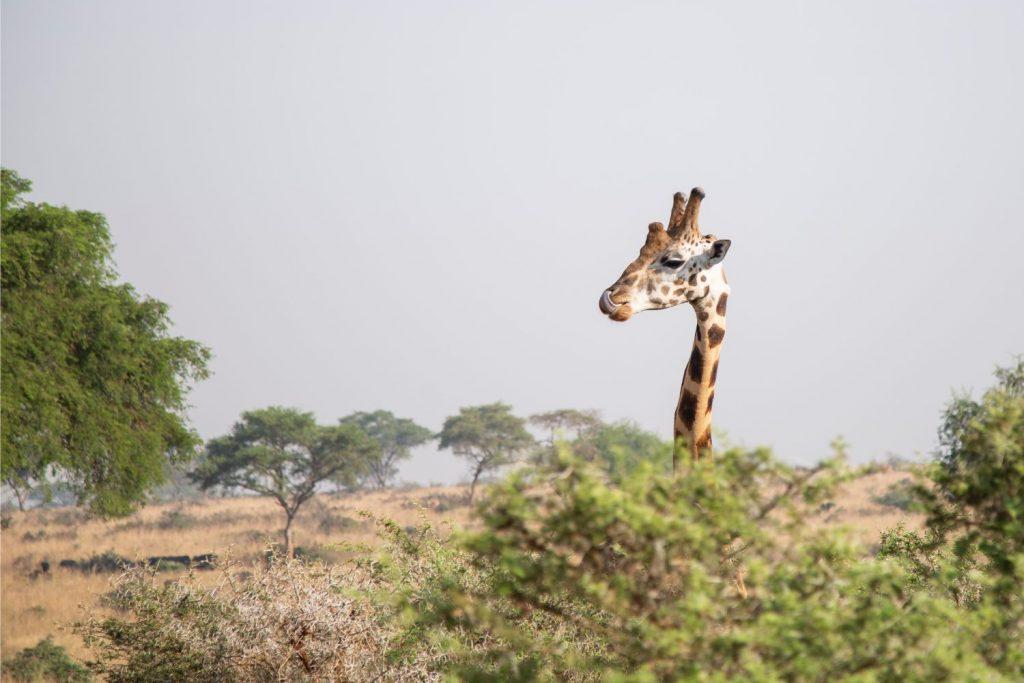 Dagboek van een wereldcruiser: op safari in Zuid-Afrika