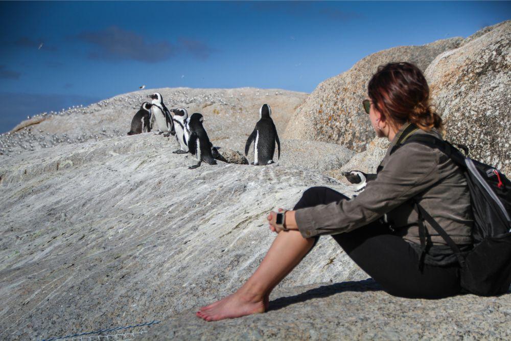 Heel dichtbij de pinguïns