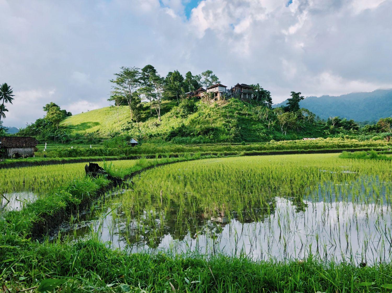 Een bezoek aan de rijstvelden van Bali