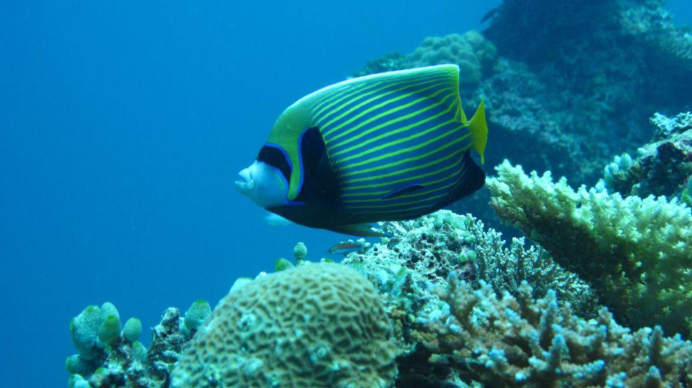 Snorkelen en vissen spotten in Indonesië